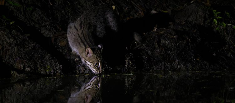 A Nocturnal Cat
